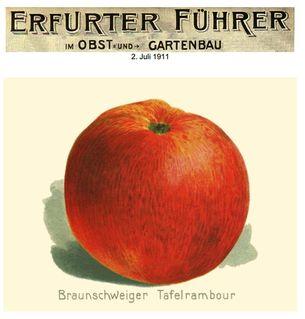 Historisches Bild des Tafel-Rambours aus einer Kunstbeilage der Zeitschrift Erfurter Führer aus dem Jahr 1911