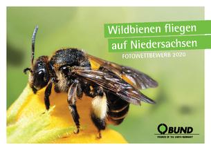 BUND-Fotowettbewerb Wildbienen