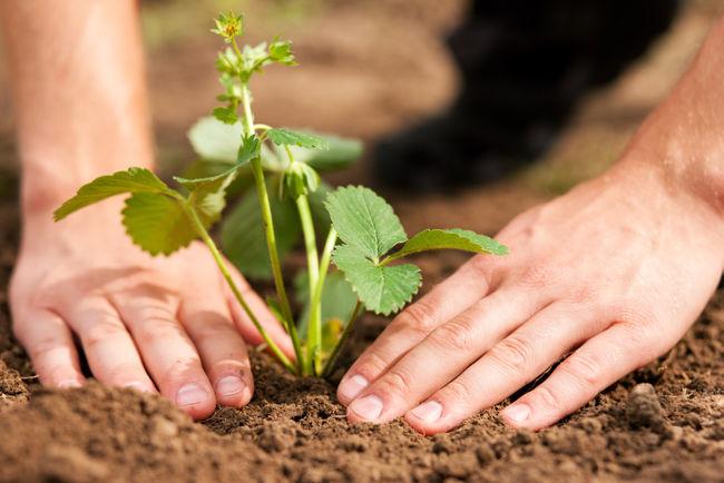Ökologisch gärtnern (Fotolia)