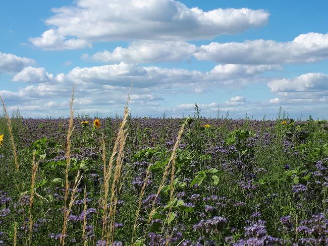 Sommerblumenwiese. Foto: Ruth Paschka