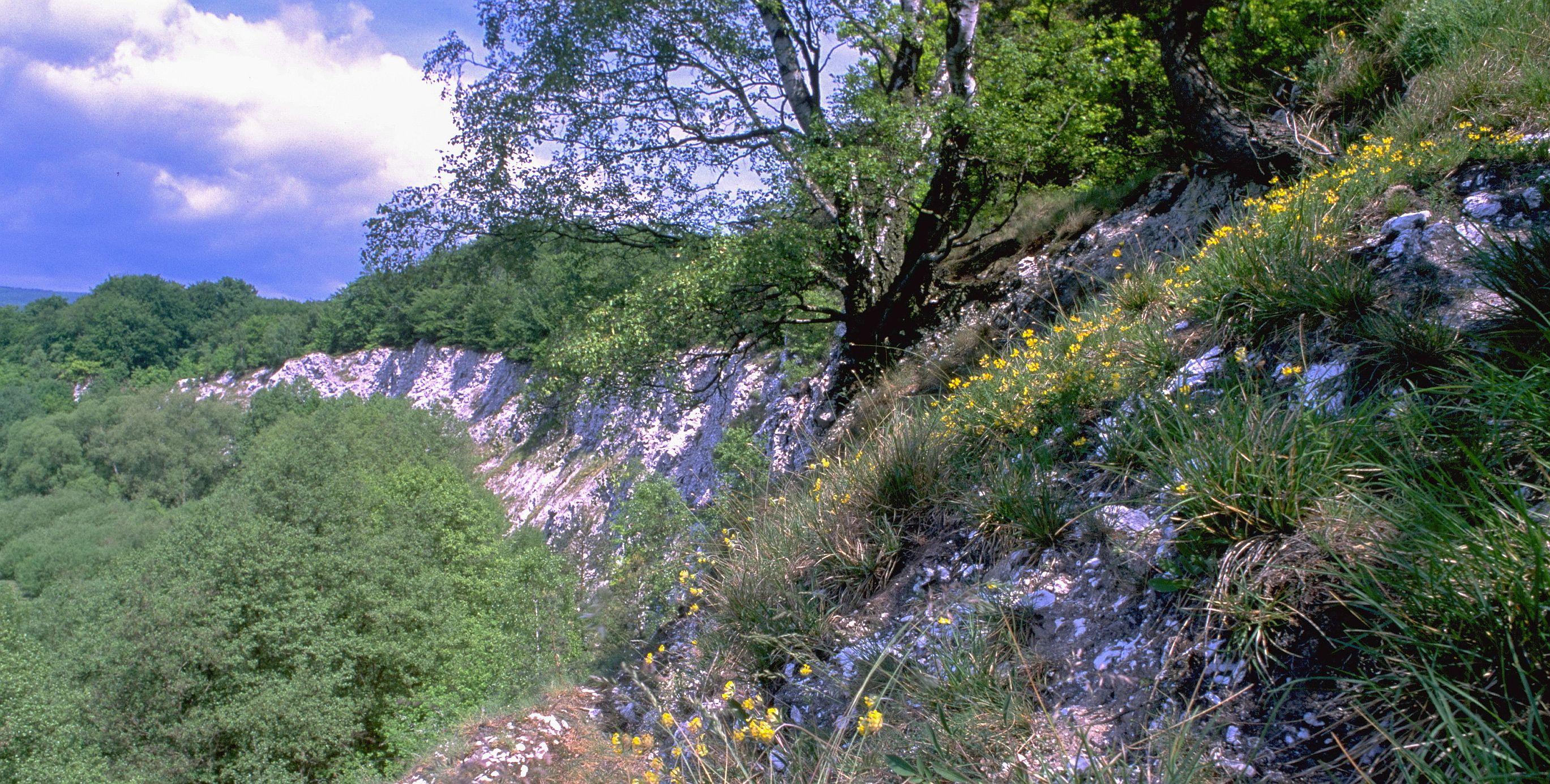 Gipskarst im Südharz (BUND/Röhl)